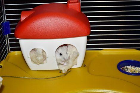 Hamster Cage KLEO42 58 x 32 x 42 cm