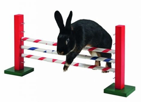 Agility Jump kisemlősöknek/rendelésre